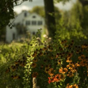 Stonecrop_Flowers_view-e1524754384174